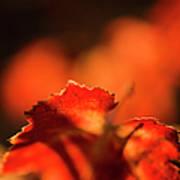 Autumn Grape Leaf Macro Art Print by Charmian Vistaunet