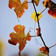 Autumn Grapevine Art Print by Dry Leaf