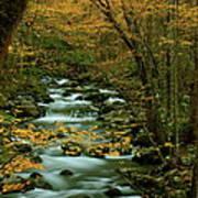 Autumn Greenbriar Cascade Art Print