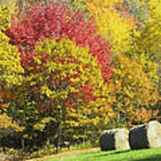 Autumn Hay Being Harvested In Maine Art Print
