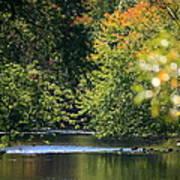 Autumn Highlights On The Quinnebaug River Art Print