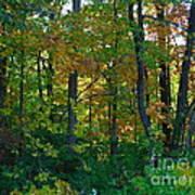 Autumn Hilltop  Art Print