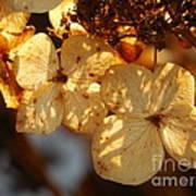 Autumn Hydrangeas I V Art Print