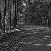 Autumn In Black And White Art Print