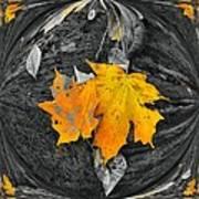 Autumn In Color Art Print