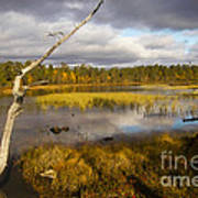 Autumn In Finland Near Inari Art Print