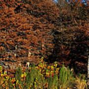 Autumn In Gruene Art Print
