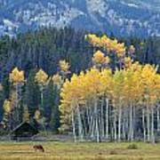 1m9359-autumn In Jackson Hole Ranch Country Art Print