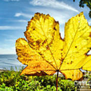 Autumn In Lyme Regis Art Print