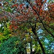 Autumn In Raleigh 009 Art Print