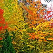 Autumn In Southwest Michigan Art Print