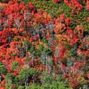 Autumn In The Wasatch Range Art Print