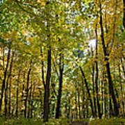 Autumn In Uw Arboretum In Madison Wisconsin Art Print by Natural Focal Point Photography