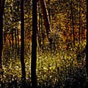 Autumn In Vail - Colorado Art Print