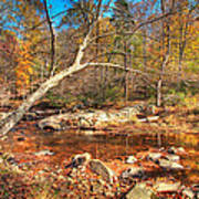 Autumn In Virginia Art Print