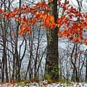 Autumn In Winter Art Print