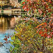 Autumn Lake And Swan Art Print