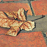 Autumn Leaf Art Print