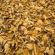 Autumn Leaf Background Art Print
