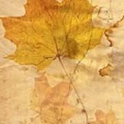 Autumn Leaf In Grunge Style Art Print