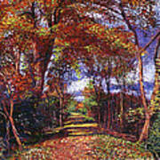 Autumn Leaf Road Art Print