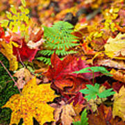 Autumn Leaf Salad Art Print