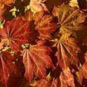Autumn Leaves 00 Art Print