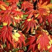 Autumn Leaves 07 Art Print