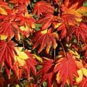 Autumn Leaves 08 Art Print