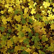 Autumn Leaves 091 Art Print