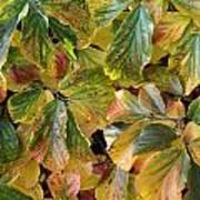Autumn Leaves 79 Art Print