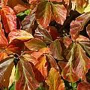 Autumn Leaves 81 Art Print