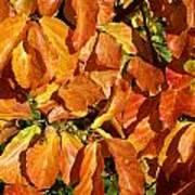 Autumn Leaves 82 Art Print