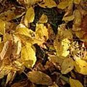 Autumn Leaves 95 Art Print