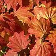 Autumn Leaves 98 Art Print