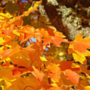 Autumn Leaves Art Print Yellow Orange Art Print