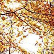 Autumn Leaves Art Print by Blink Images