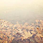 Autumn Leaves Floating In The Fog Art Print