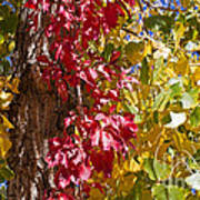 Autumn Leaves In Palo Duro Canyon 110213.97 Art Print