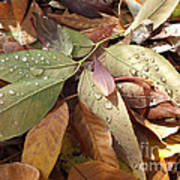 Autumn Leaves Art Print by  Marcus Maiden