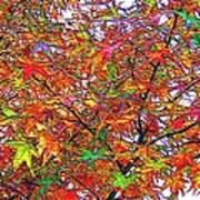 Autumn Leaves Through Filtered Sunlight II Art Print