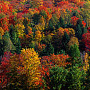 Autumn Leaves Vermont Usa Art Print