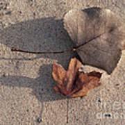 Autumn Leftovers  Art Print