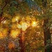 Autumn Light Symphony Art Print