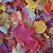 Autumn Maple Leaves - Phone Case Art Print