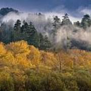 Autumn Mists Art Print
