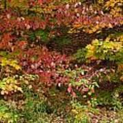 Autumn Mix Art Print