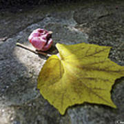 Autumn Moment Art Print