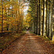 Autumn Mood In The Forrest Art Print