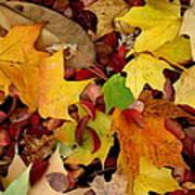 Autumn Moods 19 Art Print